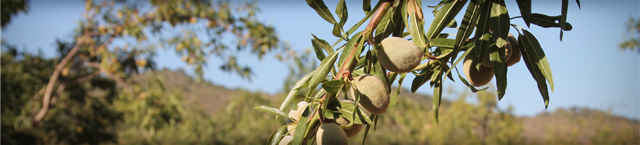 cosecha-en-peligro-web-cooperativa-sierra-de-segura